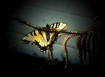 Photograph - Yellow Tiger by Emily Stauring