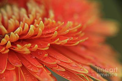 Photograph - Yellow Tips by Yumi Johnson