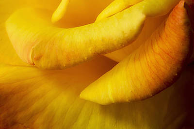 Photograph - Yellow To Red Petals by Mary Jo Allen