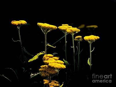 Photograph - Yellow Tops by Jenny Revitz Soper