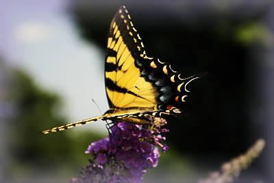 Fluttering Photograph - Yellow Touch by Scott Wyatt