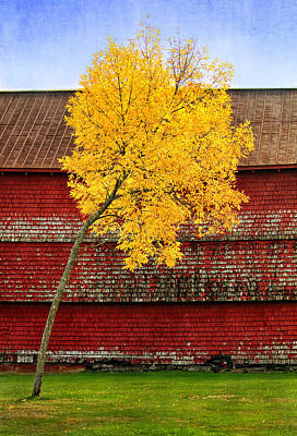 Photograph - Yellow Tree And Red Shed In Maine by Carolyn Derstine