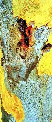 Photograph - Yellow Tree - Australia by VIVA Anderson