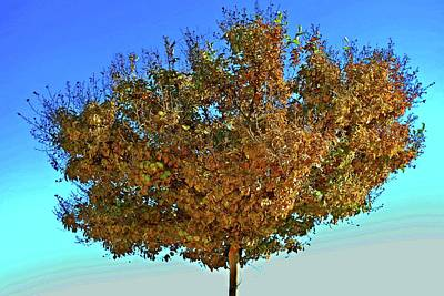 Photograph - Yellow Tree Blue Sky by Matt Harang