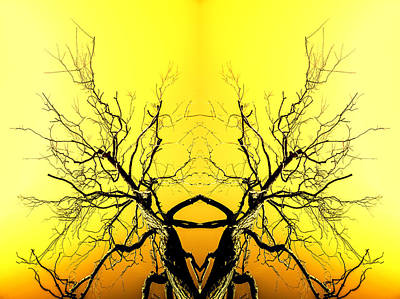 Photograph - Yellow Tree Forest Antlers by John Williams