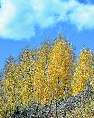 Photograph - Yellow Trees No. 4 by Sandy Taylor