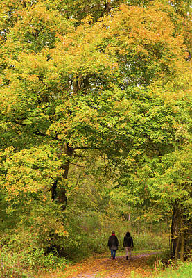 Photograph - Yellow Trees In Fall by Matthias Hauser