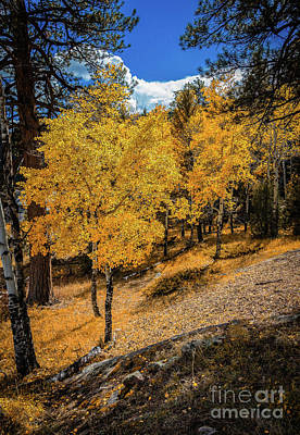 Photograph - Yellow Trees by Jon Burch Photography
