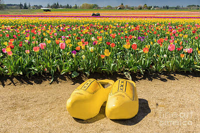 Photograph - Yellow Tulip Clogs by Louise Magno