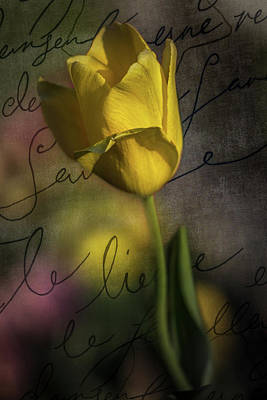 Photograph - Yellow Tulip Love Letter by Michael Arend