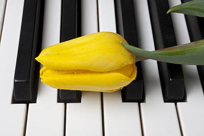 Piano Keys Photograph - Yellow Tulip On Piano Keys by Garry Gay