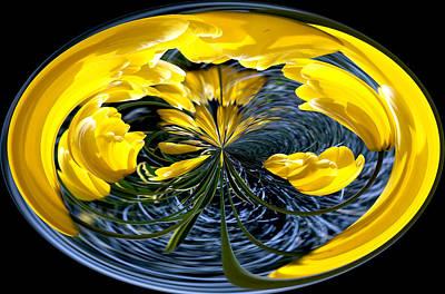 Yellow Tulip Art Print by Robert  McCord