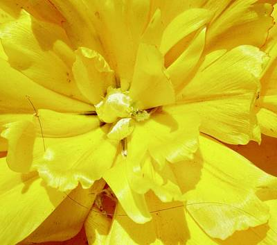 Photograph - Yellow Tulip by Stephanie Moore