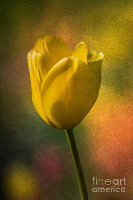 Photograph - Yellow Tulip Textures Of Spring by Michael Arend