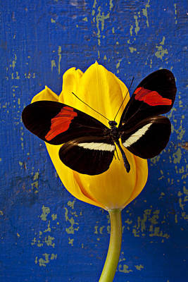Floral Still Life Photograph - Yellow Tulip With Orange And Black Butterfly by Garry Gay