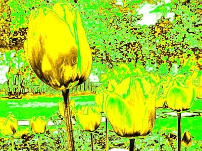 Walkway Digital Art - Yellow Tulips Abstract by Will Borden