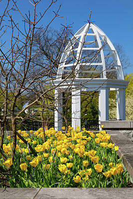 Pagoda Photograph - Yellow Tulips And Gazebo by Tom Mc Nemar