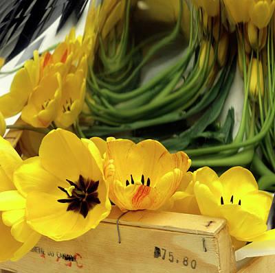 Gardening Tulips Photograph - Yellow Tulips by Bernard Jaubert
