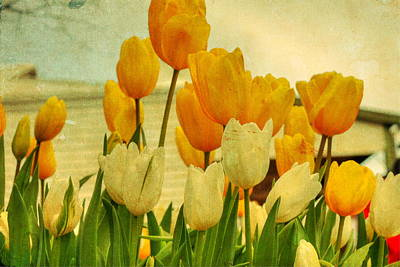 Photograph - Yellow Tulips by Elaine Teague