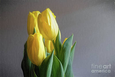 Digital Art - Yellow Tulips by Elijah Knight