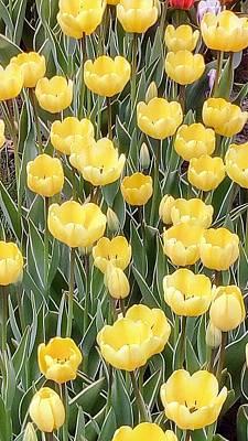 Photograph - Yellow Tulips by Oleg Zavarzin