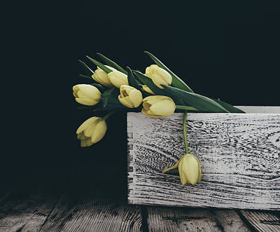Photograph - Yellow Tulips On Black by Kim Hojnacki