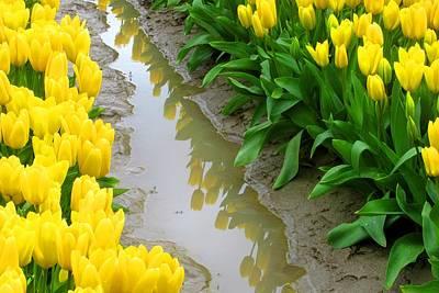 Photograph - Yellow Tulips Reflected by Karen Molenaar Terrell