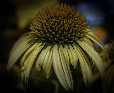 Photograph - Yellow Umbrella Flower by Leticia Latocki