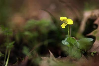 Photograph - Yellow Violet by Linda Shannon Morgan