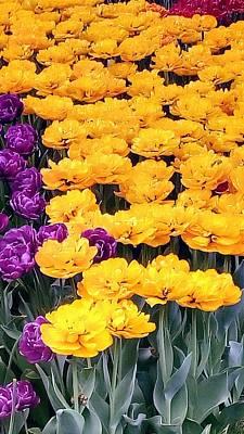 Photograph - Yellow Violets by Oleg Zavarzin