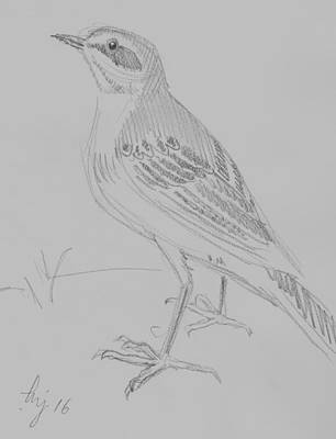 Animals Royalty-Free and Rights-Managed Images - Yellow Wagtail pencil sketch by Mike Jory