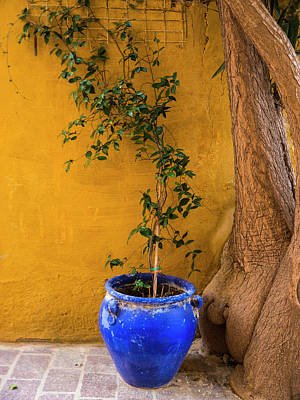 Photograph - Yellow Wall, Blue Pot by Rae Tucker