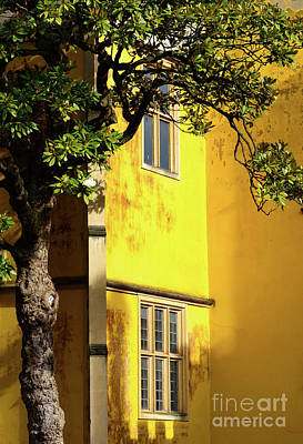 Photograph - Yellow Wall In The Sun by Colin Rayner