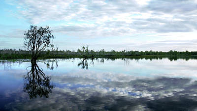 Photograph - Yellow Water Billabong - Kakadu National Park by Lexa Harpell