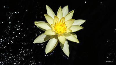 Photograph - Yellow Water Lily In Pond by Gary Crockett
