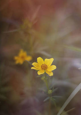 Mixed Media - Yellow Wild Flower by Stephanie Hollingsworth