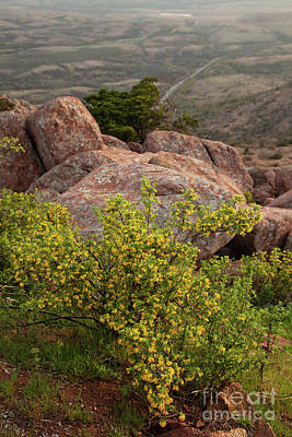 Photograph - Yellow Wildflowers In The Mountains by Iris Greenwell