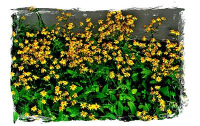 Etc. Photograph - Yellow Wildflowers by Marsha Heiken