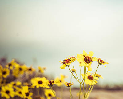 Art Print featuring the photograph Yellow Wildflowers by Mary Hone