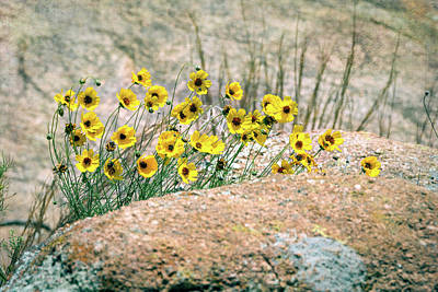 Photograph - Yellow Wildflowers On The Rocks by Debra Martz