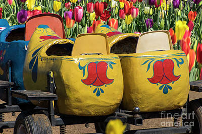 Photograph - Yellow Wooden Shoe Tulips by Louise Magno