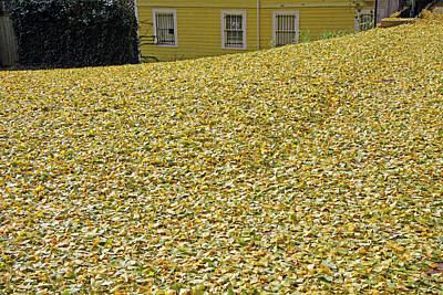 Photograph - Anyone Interested In Raking The Leaves? by Cora Wandel
