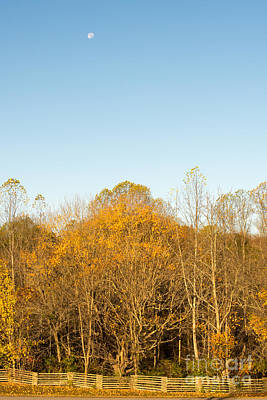 Yellow Yellow Everywhere - Natchez Trace Art Print