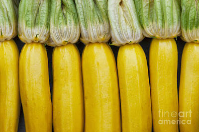 Home Grown Photograph - Yellow Zucchini by Tim Gainey