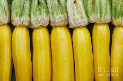 Yellow Zucchini Art Print by Tim Gainey