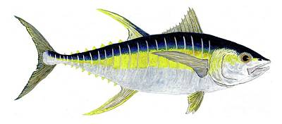 Painting - Yellowfin Tuna by Thom Glace