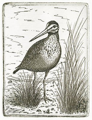 Drawing - Yellowlegs Shorebird by Charles Harden