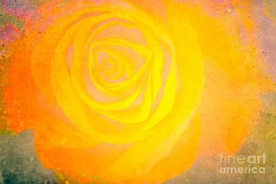 Mixed Media - Yelloworange Rose by Kim Henderson