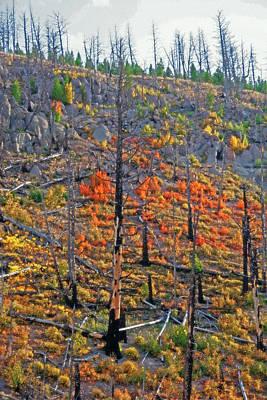 Yellowstone - Forest Burn 1 Art Print by Steve Ohlsen