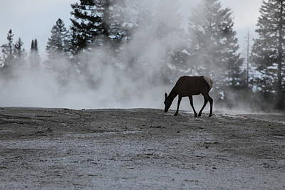 Photograph - Yellowstone 5456 by Michael Fryd